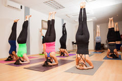 做headstand的大瑜伽小组 库存图片
