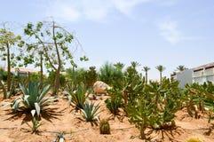 停放与仙人掌异乎寻常的热带沙漠反对在墨西哥人拉丁美洲的样式的白色石大厦反对蓝天 库存照片