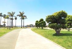 停放与树,棕榈在一个夏天晴天,蓝天 库存图片