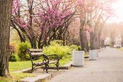 停放与美丽的紫色树和长凳的车道 免版税库存照片
