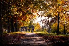 停放与走在一美好的秋天天的人的车道 免版税库存照片