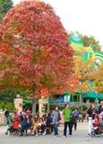 停放休息在一棵美丽的秋天树下的访客 库存图片