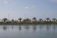 停放在城市巴统中心在一个晴天 在天际的棕榈树 库存图片