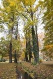 停放在秋天和黄色红色叶子与小河 免版税库存图片