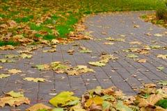 停放用下落的叶子和绿草盖的道路 免版税库存图片