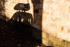 停放的汽车的阴影有屋顶箱子的 库存照片