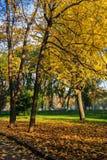 停放的路在秋天黄色叶子 免版税库存照片