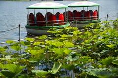 停放,湖,莲花叶子,巡航 库存照片