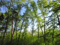 停放结构树 库存照片