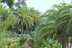 停放GÃ ¼侧房公园Guell巴塞罗那卡塔龙尼亚西班牙 免版税库存图片