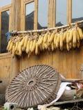 停止传统围场黄色的中国玉米 免版税库存图片