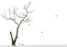 停止和干燥结构树最后叶子  免版税库存图片