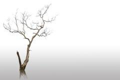 停止和干燥结构树 图库摄影