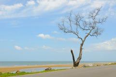 停止和干燥结构树 免版税库存照片