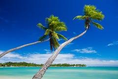 停止在惊人的绿色盐水湖的可可椰子结构树 库存照片