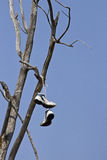 停止在树枝的鞋 免版税库存照片