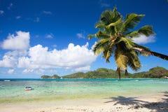 停止在棕榈树的海滩 库存照片