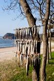 停止在结构树的干燥鱼在南韩 免版税库存照片
