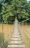 停止对结构树的桥梁 库存照片