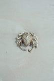 停止海滩的螃蟹 免版税库存照片