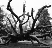 停止的公园结构树 免版税库存照片