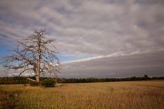 停止的农田印第安纳结构树 库存图片