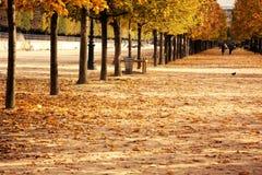 停止的叶子巴黎时间 免版税库存图片