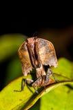 停止的叶子螳螂 库存照片