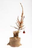 停止的圣诞树 免版税库存图片