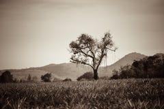 停止的孤立结构树 免版税图库摄影