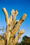 停止的寿命新的支持结构树 库存照片