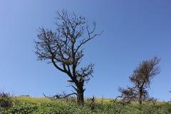 停止的小山结构树 免版税库存照片