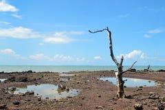停止的岸结构树 免版税库存图片