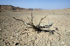 停止的工厂在沙漠 库存照片