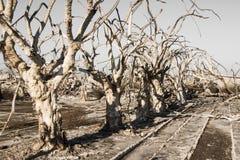 停止的常设结构树 库存照片