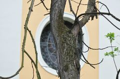 停止的干结构树 库存图片
