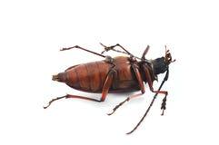 停止的昆虫 免版税库存图片