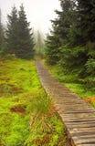 停止的有雾的森林早晨 免版税库存照片