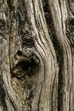 停止的木头 免版税图库摄影