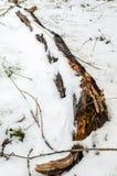 停止的木头 图库摄影