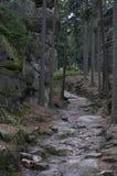 停止的林木 免版税库存图片