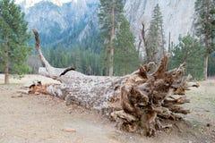停止的林木 免版税图库摄影