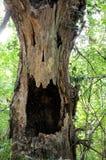 停止的树干在森林里 图库摄影