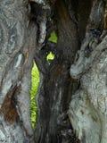 停止的树干 免版税图库摄影