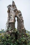 停止的树桩结构树 库存照片