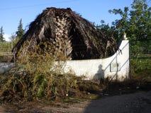 停止的棕榈树 库存照片