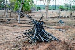 停止的棕榈树 免版税库存照片