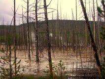 停止的森林 免版税库存图片