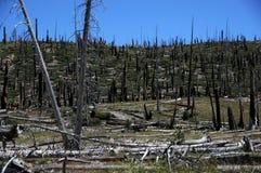 停止的森林 免版税库存照片