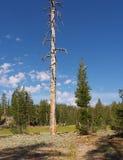 停止的死亡寿命常设结构树 免版税库存图片
